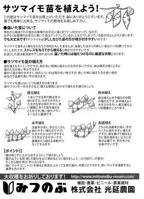 サツマイモの植え方.jpeg