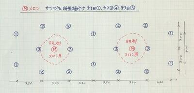 メロン&サツマイモ混植の図.jpeg